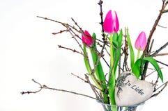 花桃红色郁金香 库存图片