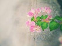 花桃红色,并且绿色叶子类似心形 库存照片