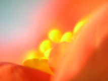 花桔子 免版税图库摄影