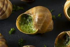花梢法国热的Escargot开胃菜 免版税图库摄影