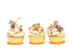 花梢食物安排用健康獐鹿沙拉和麦芽 免版税图库摄影