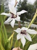 花森林春天白色 库存图片