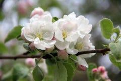 花森林春天白色 图库摄影