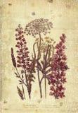 花植物的葡萄酒样式墙壁艺术有织地不很细背景 免版税库存图片