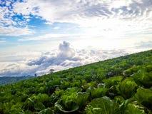 花椰菜与雾的天空视图 免版税库存照片