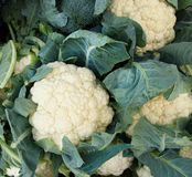 花椰菜概念食物新鲜的healty有机原始的素食主义者 库存照片