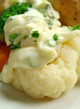 花椰菜调味汁白色 库存图片