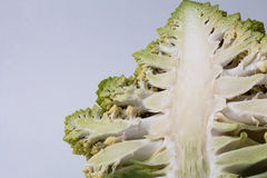 花椰菜Romanesco硬花甘蓝 免版税库存照片