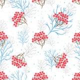 花楸浆果分支无缝的样式 向量背景 库存照片