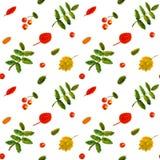 花楸浆果和桦树叶子水彩葡萄酒ha 免版税图库摄影