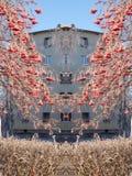 花楸浆果 库存图片