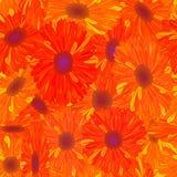 花橙色模式无缝的黄色 库存图片