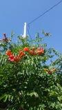 花橙色美好的夏天 免版税库存照片