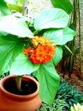 花橙色美好的庭院绿色 免版税图库摄影
