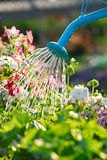 花浇灌 库存照片