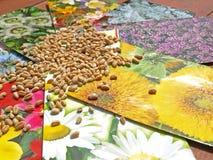 花混合种子 库存图片