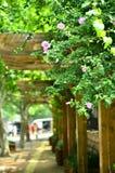 花灌木在青岛,中国 免版税库存照片