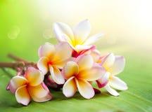 花热带杏仁奶油饼的温泉 免版税库存图片