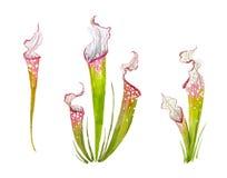 花热带水彩 库存图片