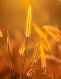 花热带黄色 免版税库存照片