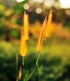 花热带黄色 库存图片