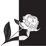 花牡丹 免版税库存图片