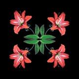 花状补缀品 开花在补缀品叶子的美丽的孤挺花花 免版税库存图片