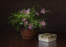 花狂放在花瓶上升了 库存图片