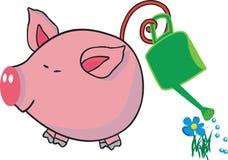 花猪浇灌 皇族释放例证