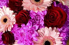花玫瑰和雏菊花束  库存图片