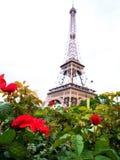 花玫瑰艾菲尔铁塔和灌木  免版税库存照片