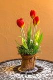 花瓶在桌上的郁金香 库存图片