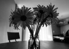 花瓶戴西 免版税库存图片