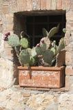 花瓶的多汁植物 库存照片