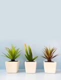 花瓶的树人为植物装饰架子的 免版税库存照片