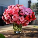 花瓶花,桃红色大竺葵花束 库存图片