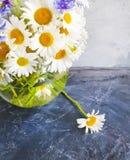 花瓶雏菊花,在具体背景的自创矢车菊 免版税库存照片