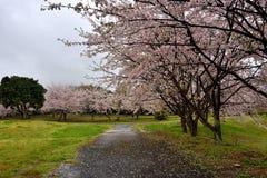 花田和道路在天狮瓷附近停放,英雄传奇肯,日本 免版税图库摄影
