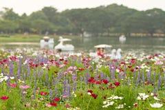 花田和defocused湖背景 选择聚焦 图库摄影