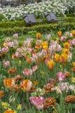 花田在春天在绽放的与三把棕色椅子 免版税库存图片