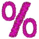花百分号 由兰花做的五颜六色的字母表的花卉元素开花 免版税库存图片