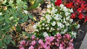 花的不同的类型和颜色在花卉墙壁,美丽的庭院,特写镜头上的 股票视频