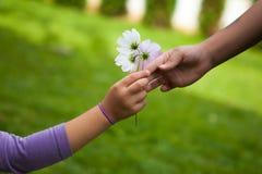 给花的儿童的手她的朋友 免版税库存图片