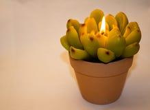 以花的形式蜡烛 免版税库存照片