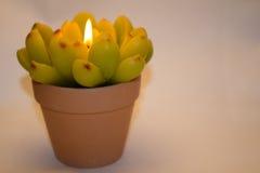 以花的形式蜡烛 免版税图库摄影