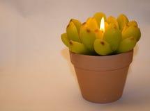 以花的形式蜡烛 库存图片