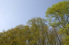 花的春天森林 免版税库存图片