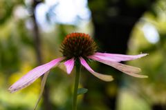 花的朴素在秋天的庭院里 免版税库存照片