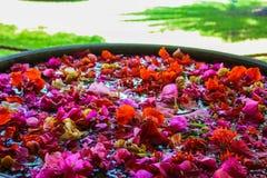 花的构成, Islamorada迈阿密 库存图片