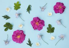 花的样式-野生玫瑰、茉莉花和翠雀, 库存照片